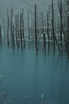 Blue Pond at Biei, Hokkaido, Japan