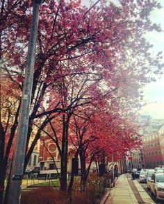 #spring #springiscoming #springisintheair #pink #pinkflowers #trees #church #milan #milano #milanocity #milanodaclick #milanodavedere #igdaily #ig_milan #igersmilan #sunnyday #hotday #sunnymilan #sun #sunmorning #love #inlovewithspring by carmela_vergadoro