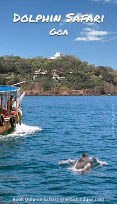 Book Dolphin trip in Goa this vacation for the best offers with online booking and enjoy the sights and sounds of Arabian Sea on a memorable boat ride Arabian Sea, Goa India, Sight & Sound, Boat Tours, Cruises, Wonderful Places, First World, Dolphins, Safari