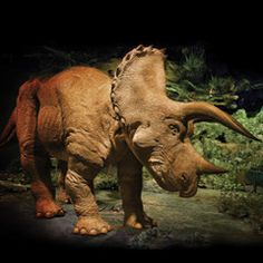 For anyone not sure what to get me on my birthday... The 20 Foot Animatronic Triceratops.