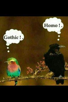 Gothic Homo
