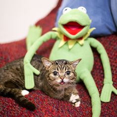 Sorry Ms Piggy, Kermit's spending this holiday season with BUB.