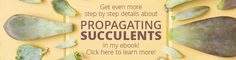 Propagating Succulents eBook