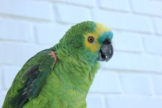 Check out Green parrot on a blurry brick wall by Mosaika on Creative Market Animals Photos, Brick Wall, Parrot, Check, Creative, Green, Parrot Bird, Exposed Brick, Brick Walls