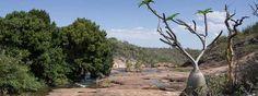 Sukkulenten Madagaskars | Malagasya-Travel