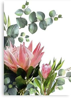 'protea white ' Canvas Print by InkheArt Designs Flor Protea, Protea Art, Protea Flower, Flower Images, Flower Art, Watercolor Flowers, Watercolor Paintings, Beautiful Flowers Pictures, Flowers Nature