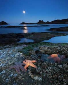 Moonlight Starfish, Seal Rock Beach, Oregon