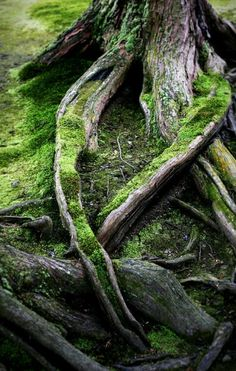 """They say that moss is """"water made visible"""", always showing you where the water has pooled and run. This proves it."""