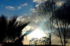 Seremos fortes, generosos, belos, dignos e confiáveis se, como as árvores nossas irmãs, crescermos e nos deixarmos guiar pela LUZ...    Teresa Varela  Foto de Jorge Ganhão
