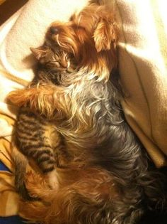 Sleeping Like Cats and Dogs Unlikely_animal_pairs http://photos.ellen.warnerbros.com/galleries/unlikely_pairs?adid=permalink_popular#183903