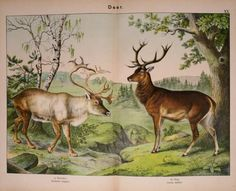 Natural history of the animal kingdom for the use of young people : - Biodiversity Heritage Library