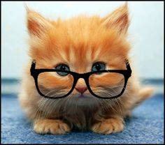 Must be a copy editor cat :-)