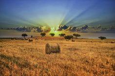 "500px / Photo ""Golden Fields"" by Vitor Santos"