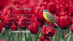 Good Night, No Worries, Nighty Night, Good Night Wishes