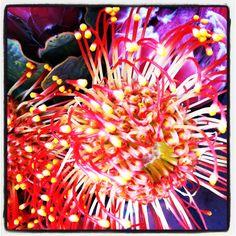 Killer flower
