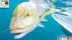 Fish That Snag - Fishing Tips & Tricks - Drifting the Roy Rufus Artificial Reef in Hervey Bay - #fishing
