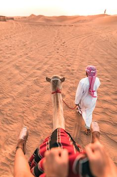 camel tour through the desert of abu dhabi.
