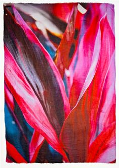Title:  Flora 5 … The brilliant red and pink hues remind me of the colors of love.  I believe love and awareness ignites compassion which gives way to human dignity. Photo taken in a garden at Innisbrook Resort, FL.