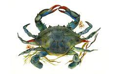 https://www.etsy.com/de/listing/94383573/aquarell-krabbe-art-beach-house-decor?ref=shop_home_active_12