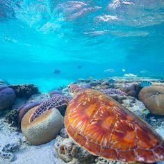 Sea Turtle's view