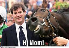 funny horse pictures - Bing Images - Come bet with me - 2 for 1 up to $A150.0