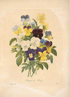 Bouquet de Pensees, by Redoute