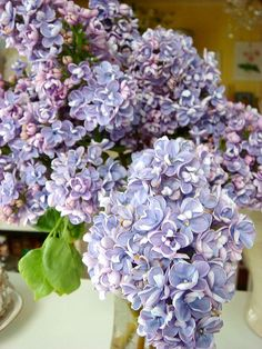 I miss lilacs. Nothing better than lilacs. We had a row on one fence at house I grew up in.  Smell always reminds me of my mom.