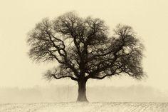Stand alone sepia by Johnny  Kristensen, via 500px