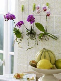 Exotischer Blumentopf: Orchideen in Körbchen setzen und Wurzeln vorsichtig durch die Körbchenöffnungen ziehen.