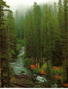 Went Fishing on the Clackamas River in Oregon many times as a kid. LOVED IT!!   Google Image Result for http://www.oregon-rivers-adventures.com/images/Oak-fork-of-Clackamas-river-Oregon.jpg