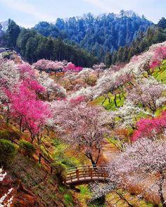Yoshino Biago Ome Japan