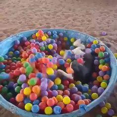 This pooch is having a ball!   #Happiness #VeryPunny https://video.buffer.com/v/5760edd00b89e1080ef8ae9a