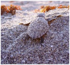 it's on my bucket list to see a sea turtle nest hatch