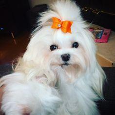 Ella in her October bow!