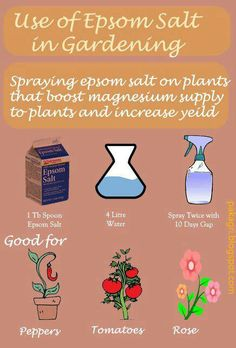 Epsom salt use for the garden