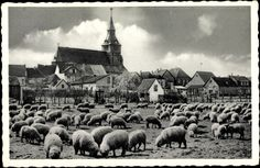 Ansichtskarte / Postkarte Kranenburg Niederrhein, Schafe weiden vor der Stadt   akpool.de