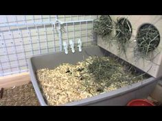 How To Litter Box Train Your Bunny Rabbit! - YouTube