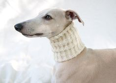 neck warmers are a must...