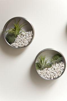 wall air plants