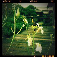 2012summer_Chigasaki