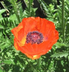 A Poem for the Poppies  http://aubreys642.com/