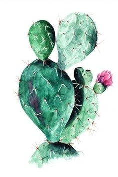Cactus Roses als Poster von Paul Fuentes Watercolor Art Diy, Watercolor Art Paintings, Watercolor Cactus, Cactus Drawing, Cactus Art, Green Cactus, Cactus Flower, Buy Cactus, Cactus Decor