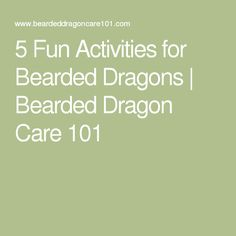 10 Bearded Dragon Facts You Must Know Before Getting A ...
