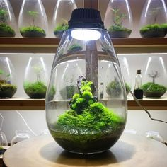 Mosslights, Innovative Indoor LED Moss Terrariums That Double as Table Lamps
