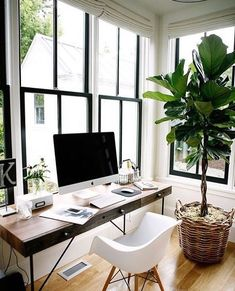 windows with black frames let in a lot of light in the office