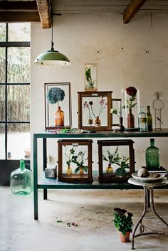 FEW DIFFERENT WAYS OF DISPLAYING PLANTS