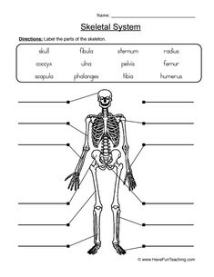 Skeletal System Activities, Skeletal System Worksheet, Human Body Activities, Science Worksheets, School Worksheets, Worksheets For Kids, Science Resources, Printable Worksheets, Skeleton System