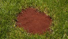Have an ugly bare spot in your lawn? Use these quick and easy tips to repair the bare spots quickly; water alone won't make these patches disappear.