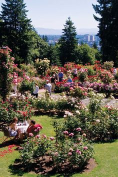 Portland's famous International Rose Test Garden was founded in 1917.