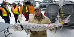 2015 Black Lake sturgeon season begins Feb. 7th - http://www.jptribune.com/2015/01/2015-black-lake-sturgeon-season-begins-feb-7th/